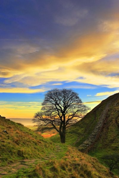 HW385D SYCAMORE GAP, HADRIAN'S WALL, NORTHUMBERLAND