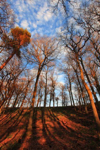 Cleggy woods